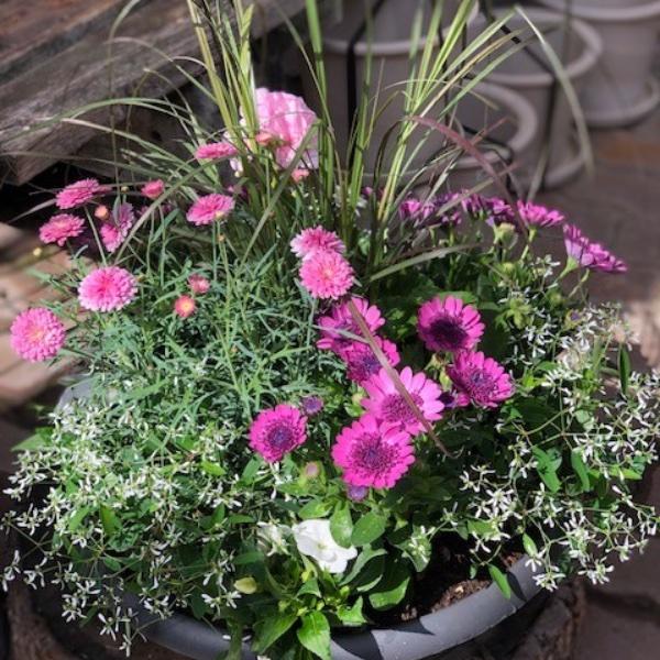 Pflanzschale in rosa-weiß (Sommer) Bild 1