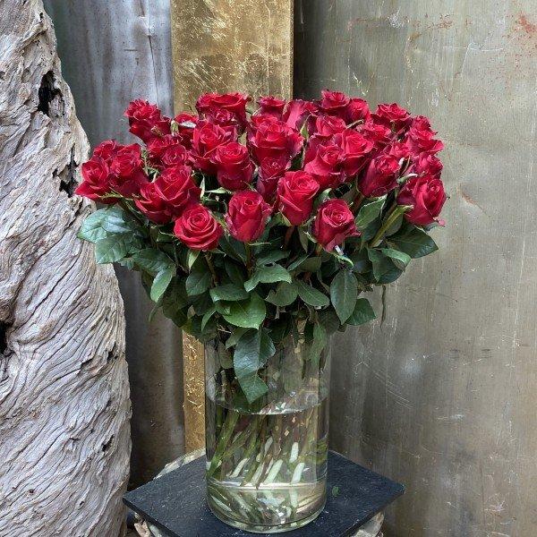 Der Rosenklassiker Bild 1