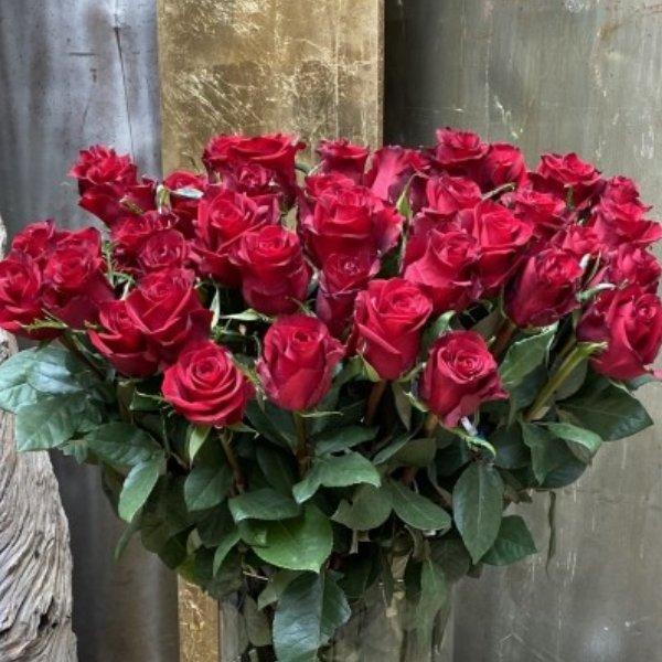 Der Rosenklassiker Bild 2