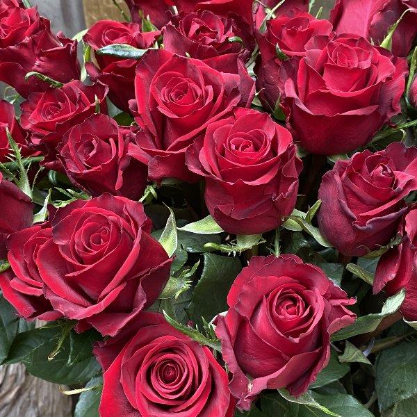 Lass Rosen sprechen Bild 1
