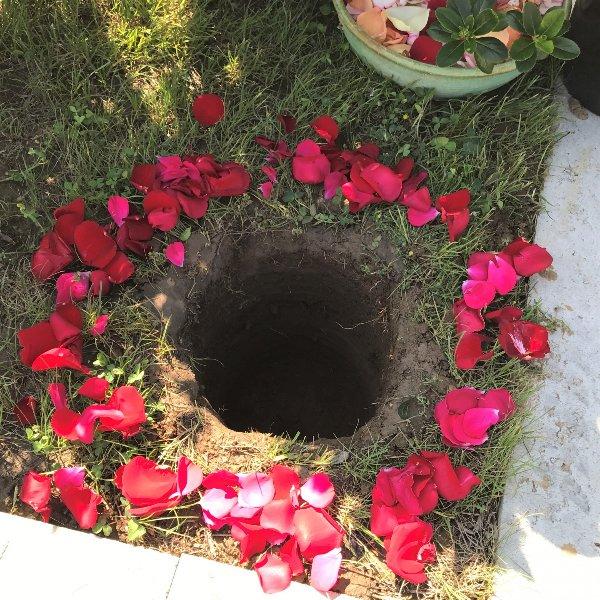 Blütenblätter um die Graböffnung Bild 1