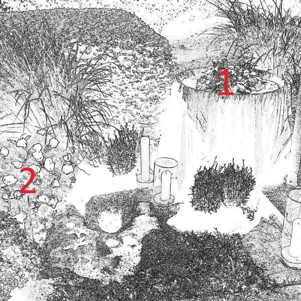 Küstenwald Bild 2