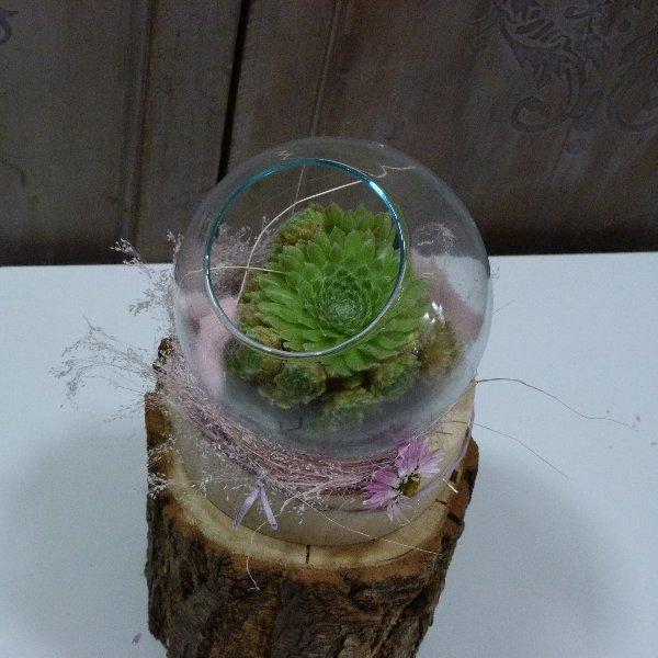 Ausgeschmückte Sukkulenten im Glas Bild 1