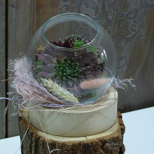 Ausgeschmückte Sukkulenten im Glas Bild 2