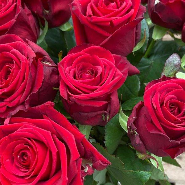 Rote  Rosen Bild 2