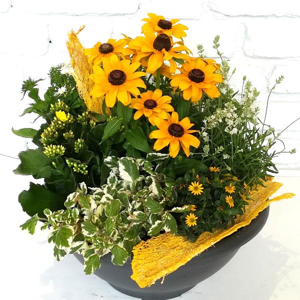 Scha 5   Gepflanzte Schale in gelb gehalten Bild 1