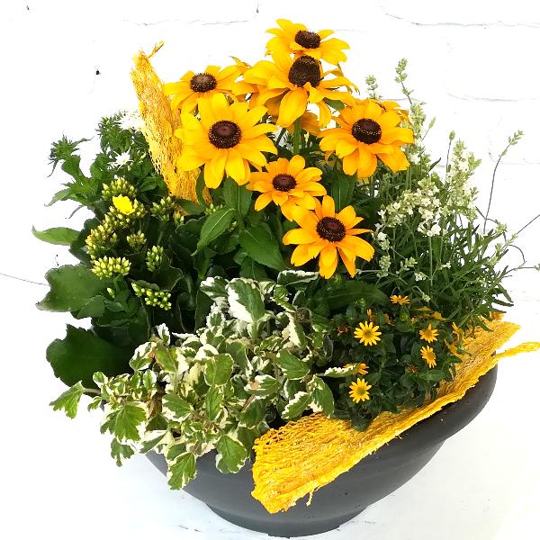 Scha 5   Gepflanzte Schale in gelb gehalten Bild 2