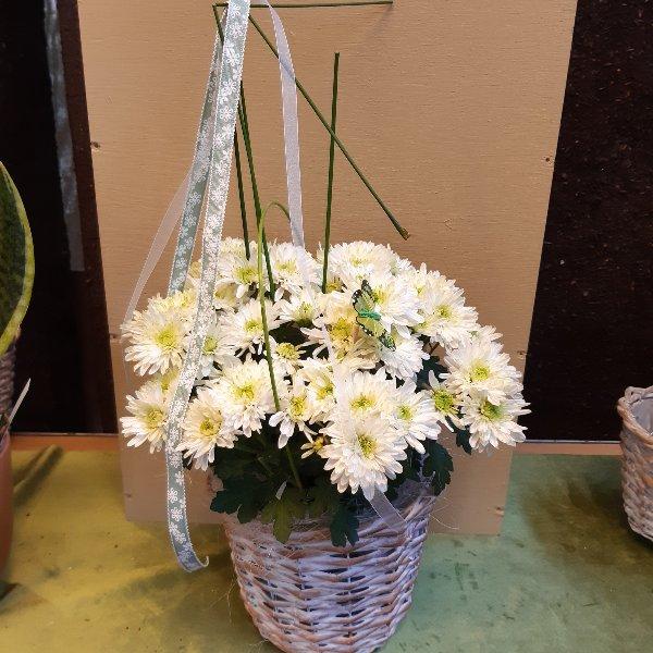 Chrysantheme mit Deko Bild 1