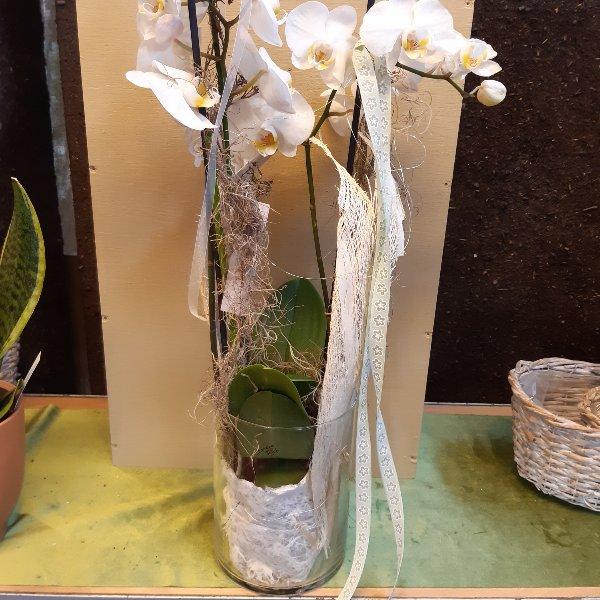 Orchidee im Glas Bild 1