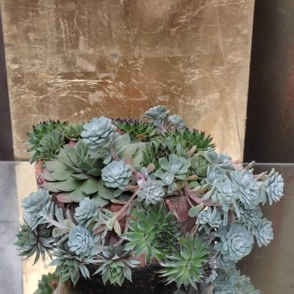 Succulentenschale Bild 2