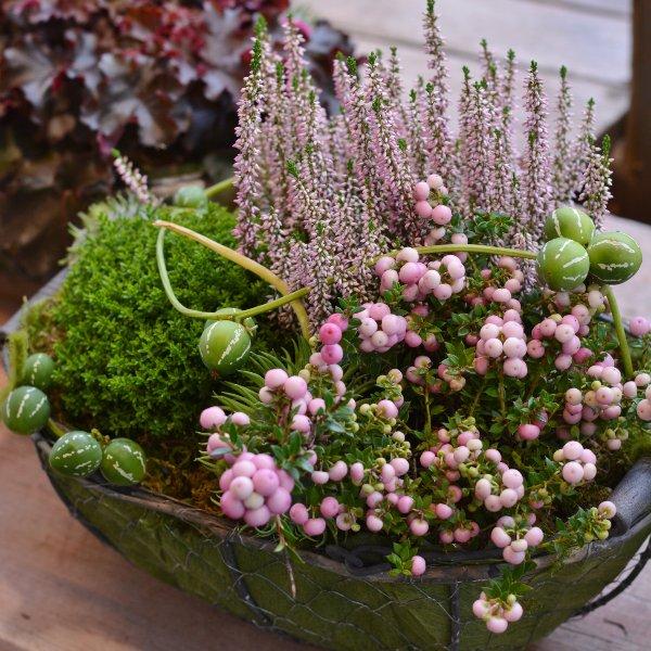 Herbstkörbchen gepflanzt Bild 1