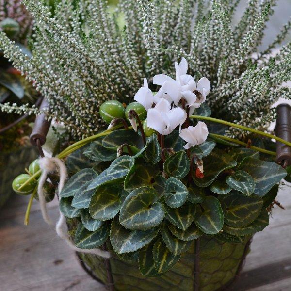 Herbstkörbchen gepflanzt Bild 3