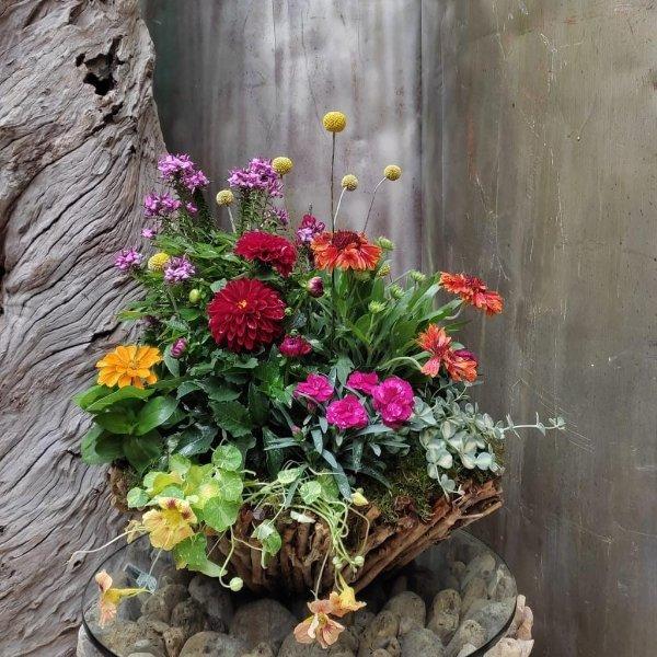 Bepflanzter Rebenkorb Bild 1