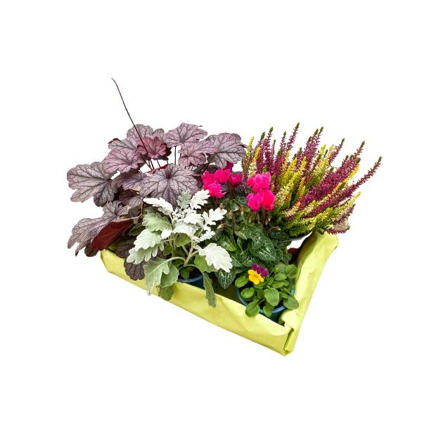 Bunter Herbstzauber - herbstliche Kiste der Gartenbaugruppe Würzburg Bild 1