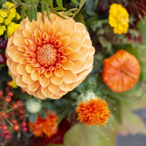 Goldener Herbst Bild 2