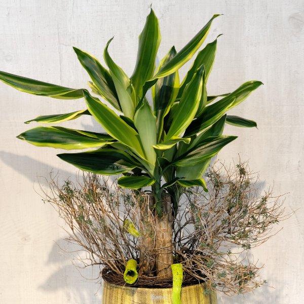 Grünpflanze Bild 2