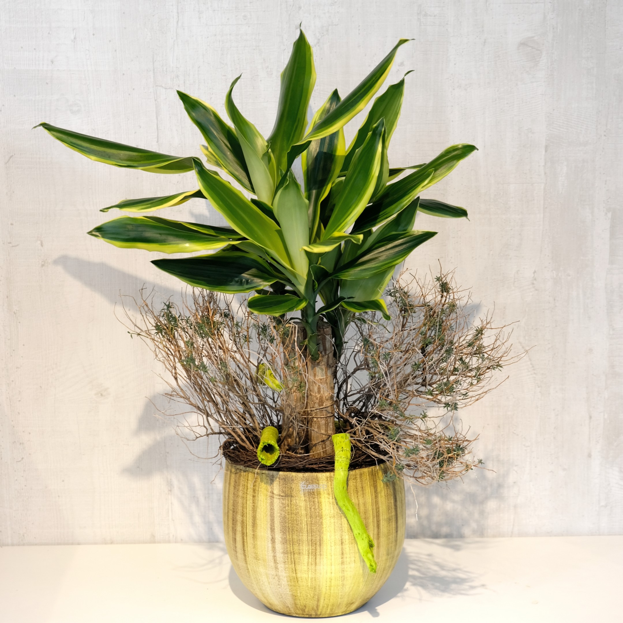 Grünpflanze Bild 1