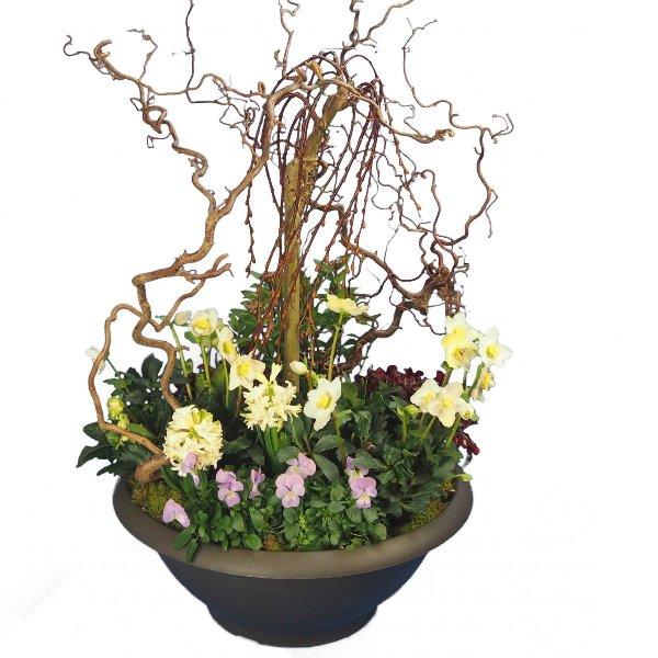 Trauerschale 50cm bepflanzt mit Salix-Hochstamm und Korkenzier-Zweigen Bild 1