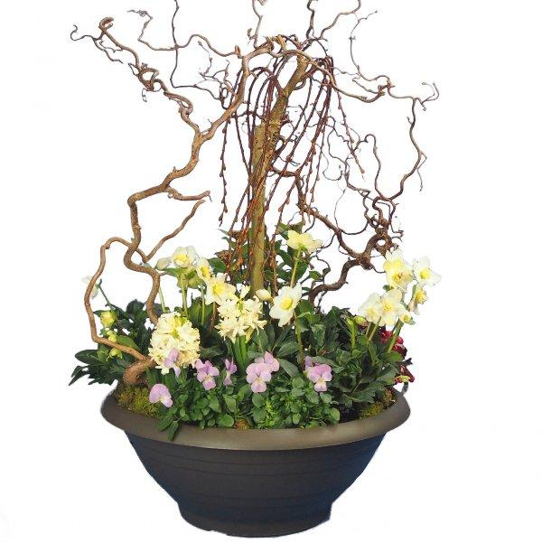 Trauerschale 50cm bepflanzt mit Salix-Hochstamm und Korkenzier-Zweigen Bild 2