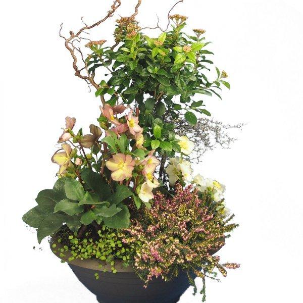 Trauerschale 50cm bepflanzt mit Viburnum-Hochstamm und Korkenzier-Zweigen Bild 1