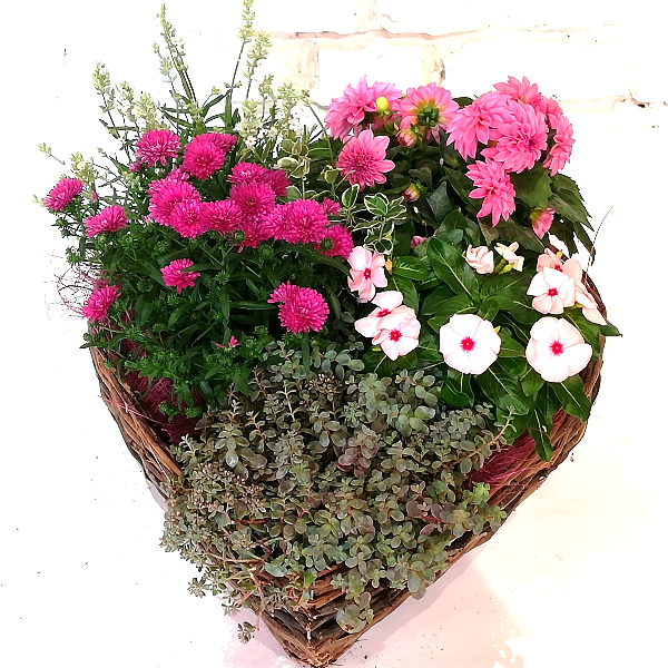 Scha 9   Bepflanztes Korb in Herzform pink Bild 1
