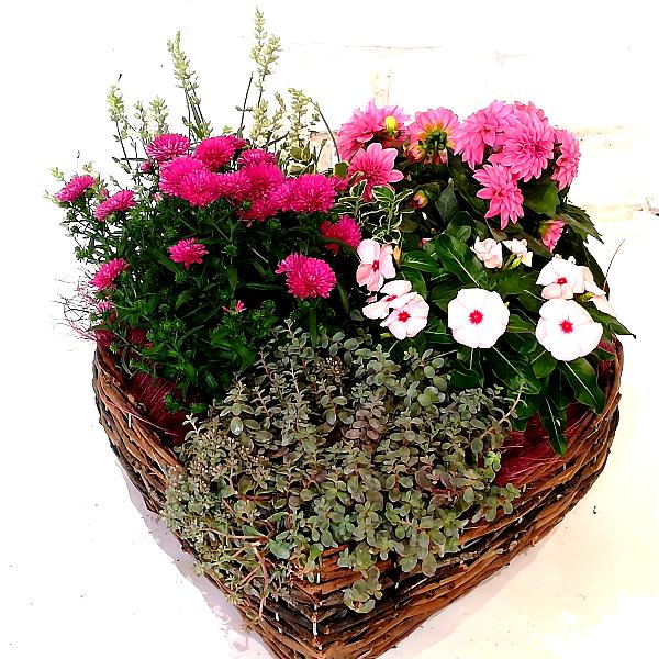 Scha 9   Bepflanztes Korb in Herzform pink Bild 2