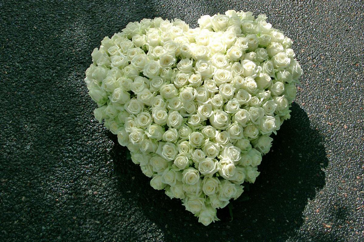 Herz 1 Bild 1
