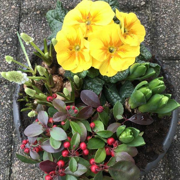Frühlingsbeginn Bild 1