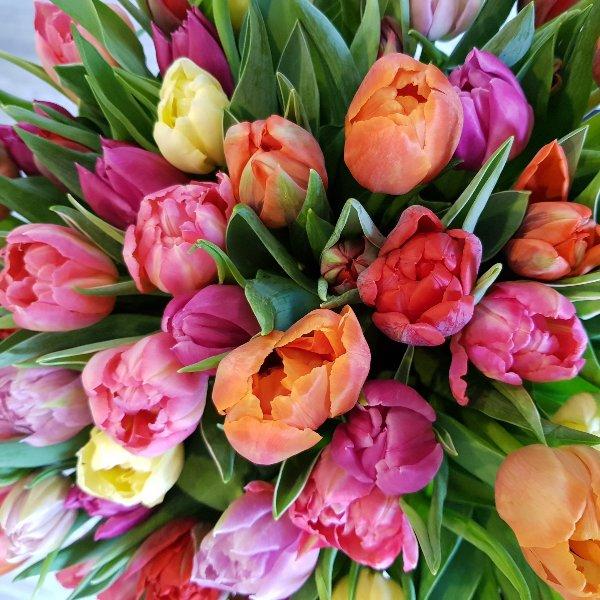 Tulpen Bild 1