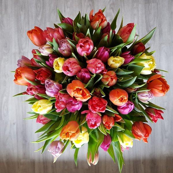 Tulpen Bild 2