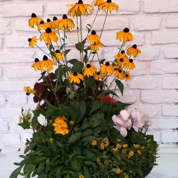 Scha 7   Bepflanzte Schale sommerlich ab 30,00 € Bild 2