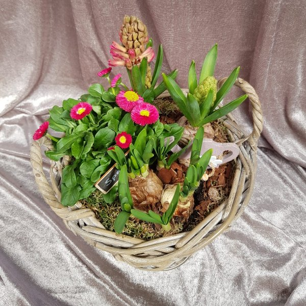 Bepflanzter Korb rosa Bild 1