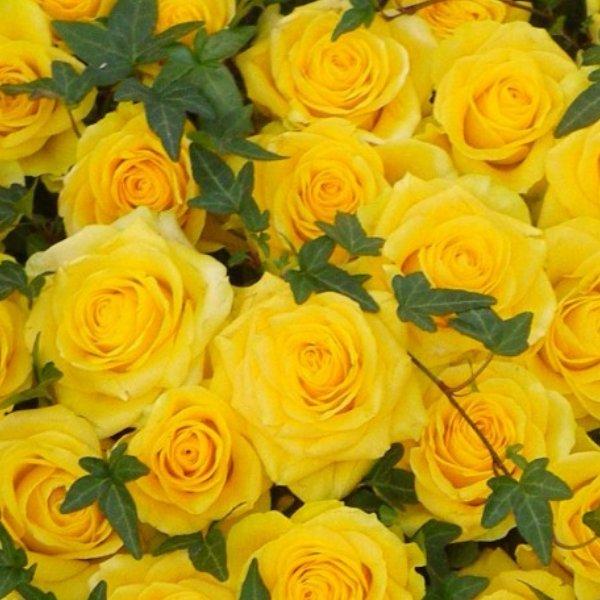 Trauerherz in gelb Bild 2