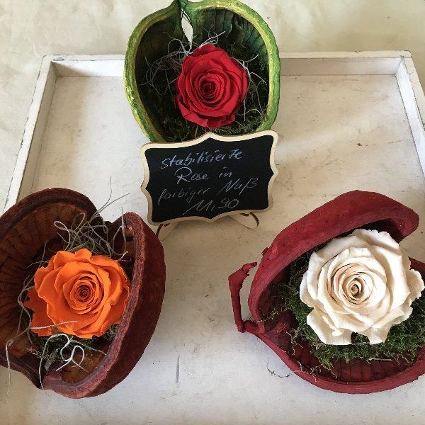 Stabilisierte Rosen in farbiger Nuß Bild 1