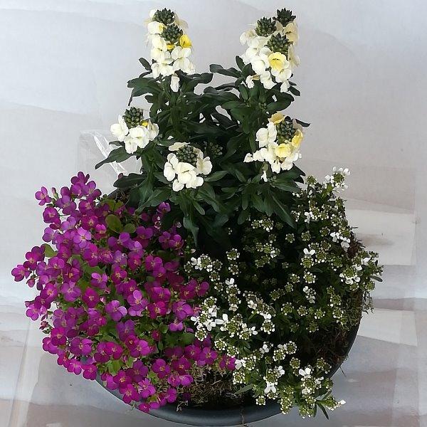 Grabscha 9  gepflanzte Schale mit Frühjahrsstauden Bild 1