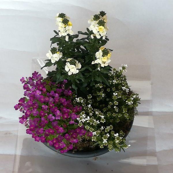 Grabscha 9  gepflanzte Schale mit Frühjahrsstauden Bild 2