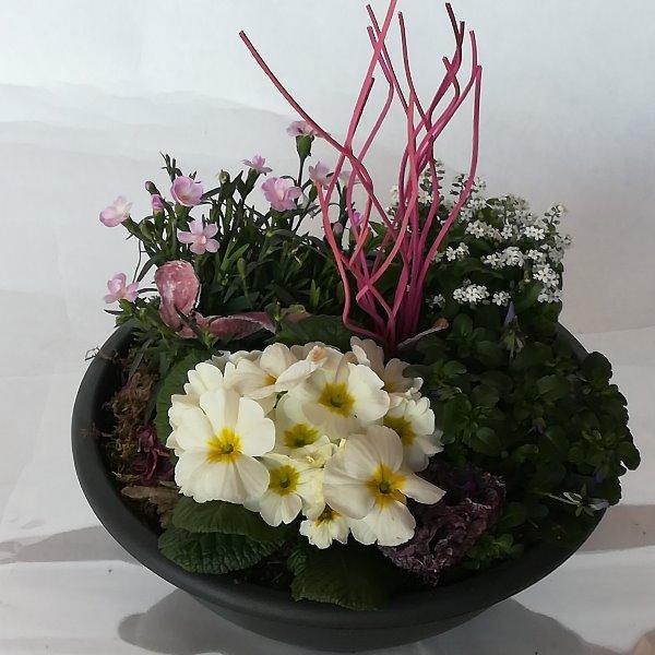 Grabscha 10 bepflanzte Schale Bild 1
