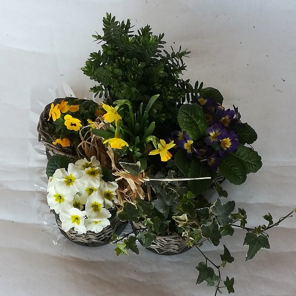 Grabscha 12 bepflanzter Korb in Blütenform Bild 1