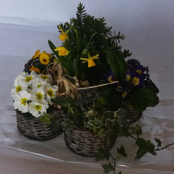 Grabscha 12 bepflanzter Korb in Blütenform Bild 2