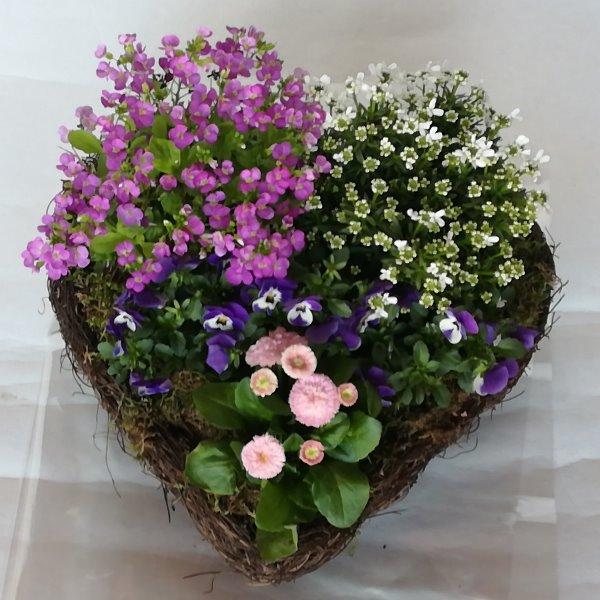 Grabscha 13  bepflanzes Mühlenbeckiaherz  mit gemischten Pflanzen Bild 1