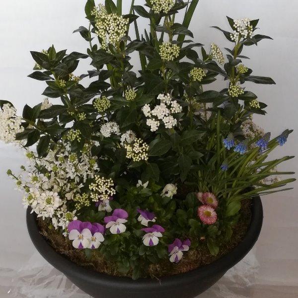 Grabscha 15  bepflanzte Schale Bild 1