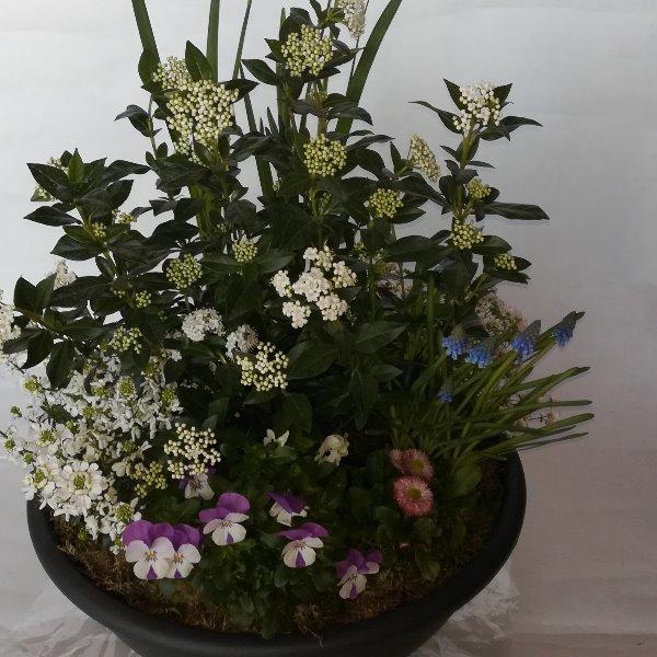Grabscha 15  bepflanzte Schale Bild 2