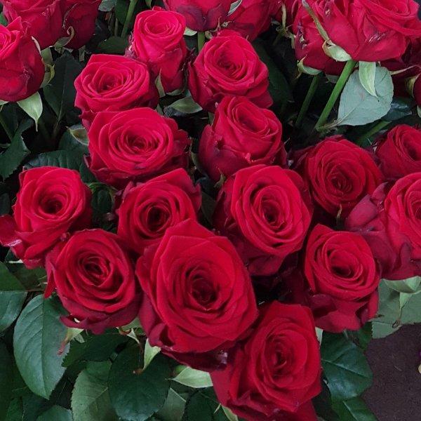Rosen in Farben Bild 2