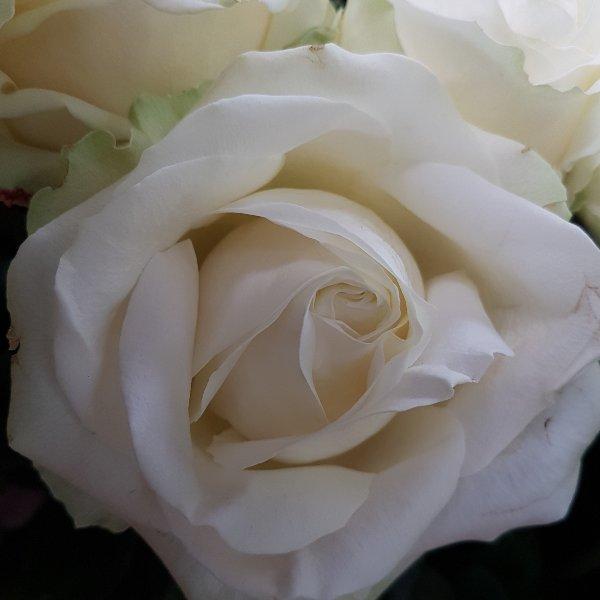 Rosen in Farben Bild 6
