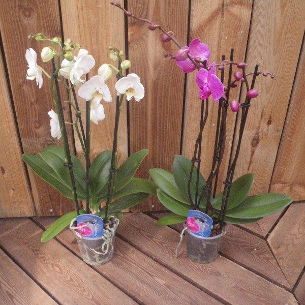 Orchideen in unterschiedlichen Farben Bild 1