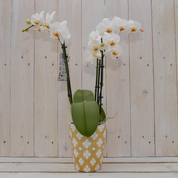Orchidee im passendem Saisontopf Bild 3