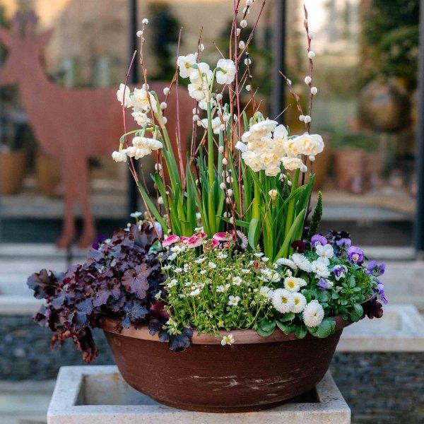 Pflanzschale Frühling Bild 1