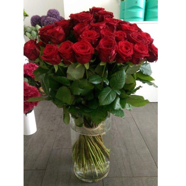 Rote Rosen pur Bild 2