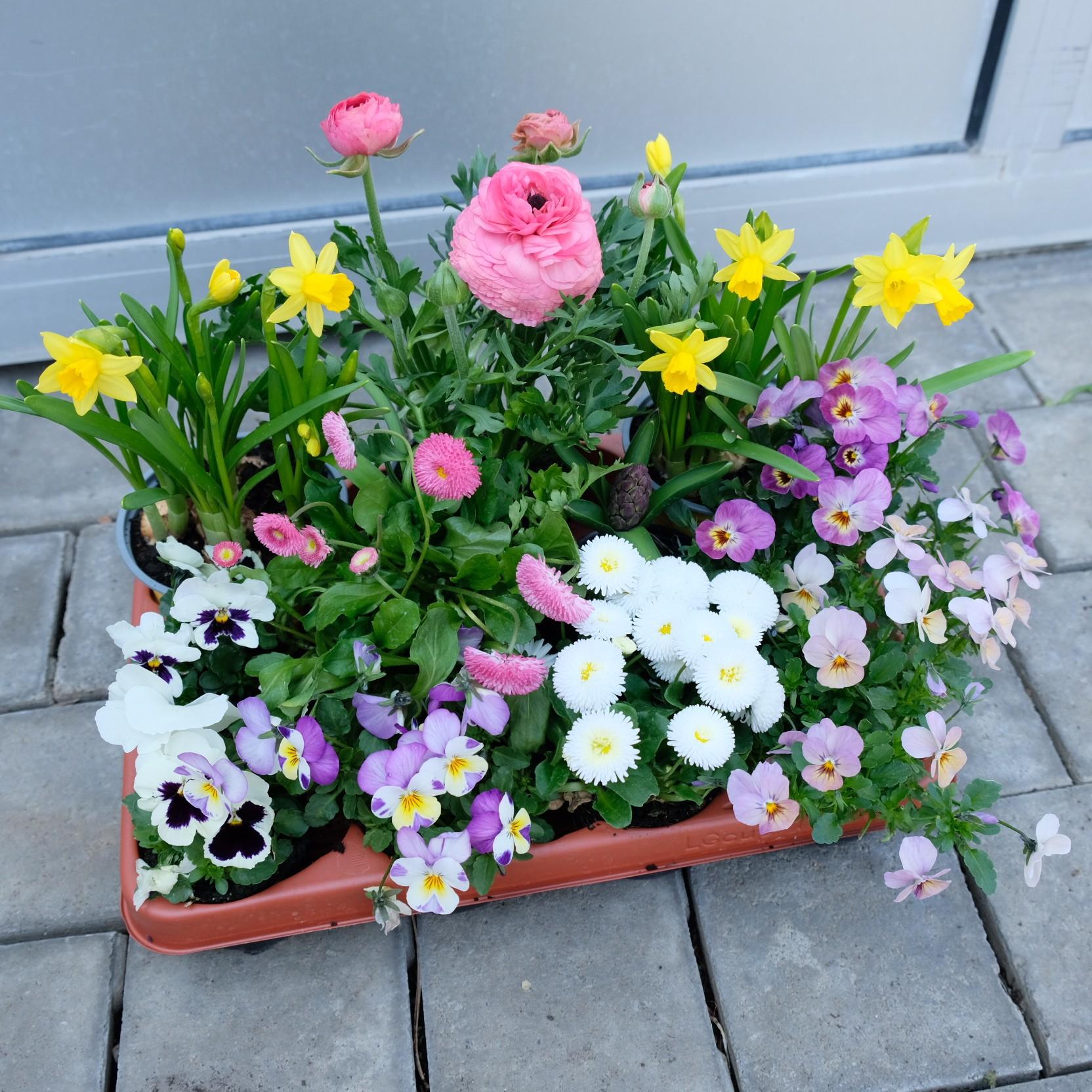 Frühlingskiste Bild 2