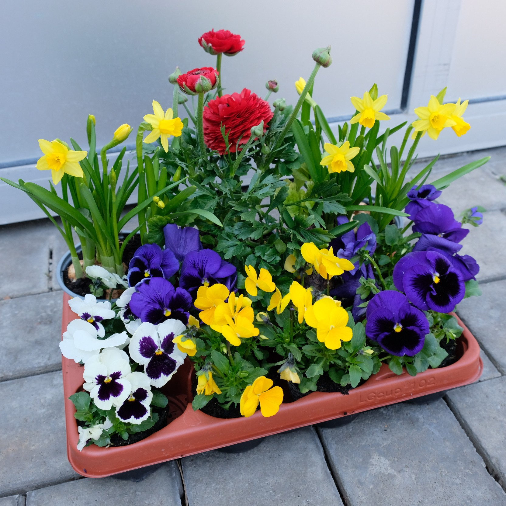 Frühlingskiste Bild 1